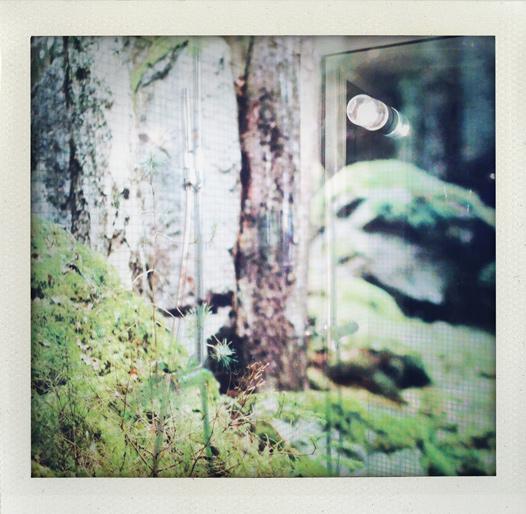 Glasvägg med skog